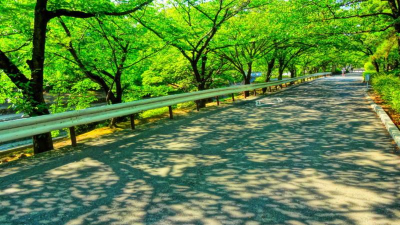 f:id:shioshiohida:20130812153055j:image