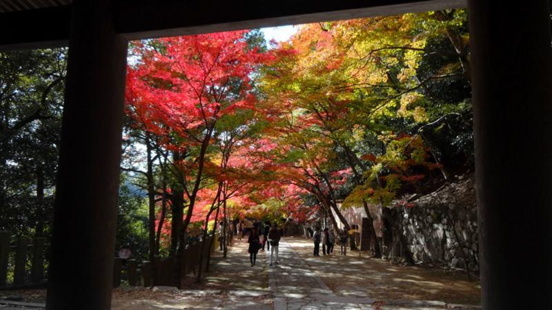 f:id:shioshiohida:20141113122719j:image