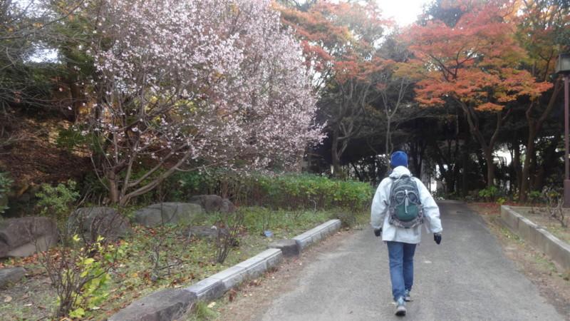 f:id:shioshiohida:20141202145018j:image