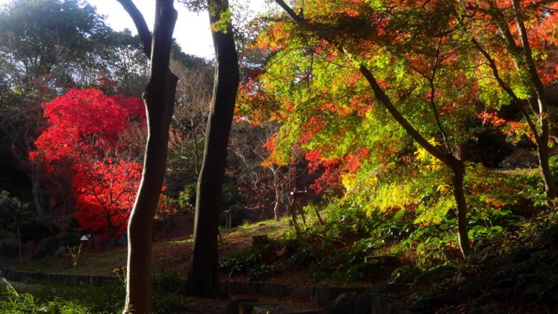 f:id:shioshiohida:20141202150200j:image