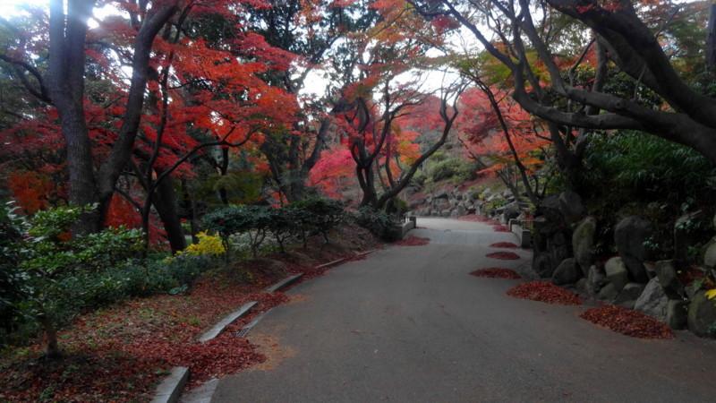 f:id:shioshiohida:20141202150624j:image
