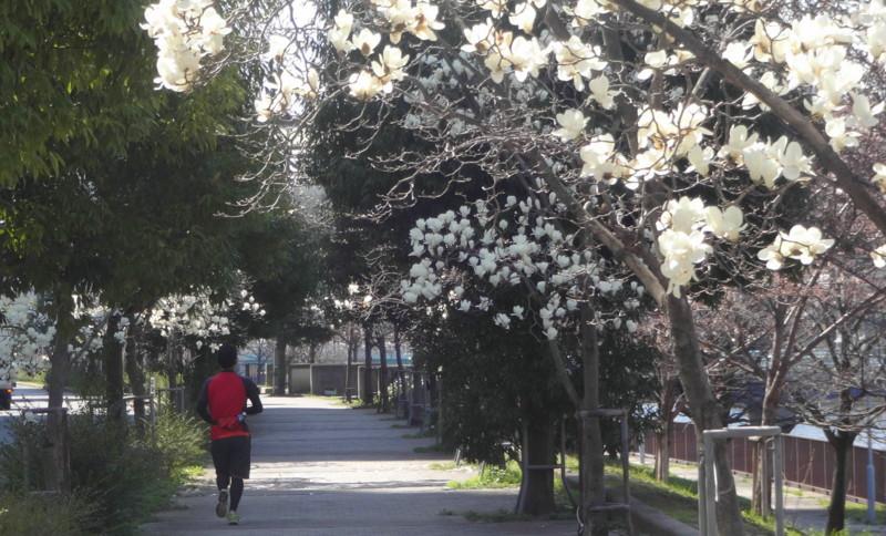 f:id:shioshiohida:20150327131929j:image