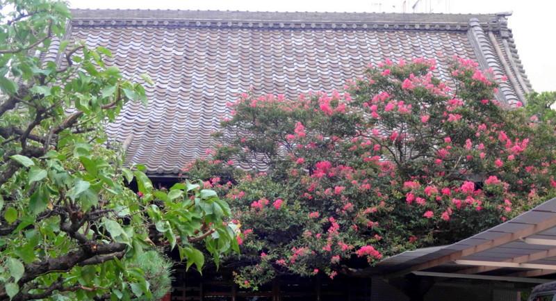 f:id:shioshiohida:20150804183041j:image