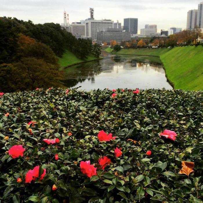 f:id:shioshiohida:20151203094040j:image:w640