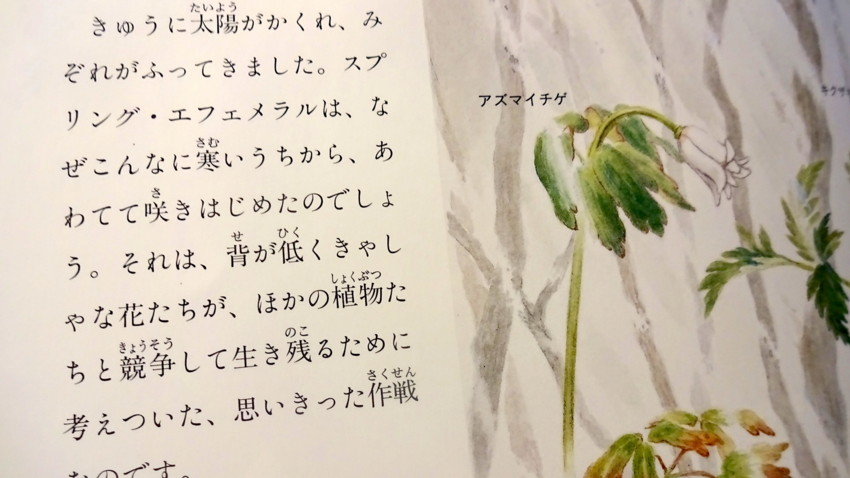 f:id:shioshiohida:20160329095510j:plain