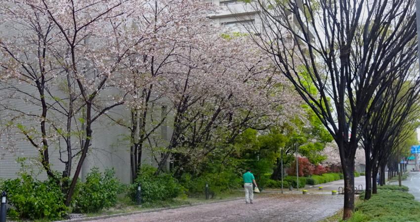 f:id:shioshiohida:20160407121351j:plain