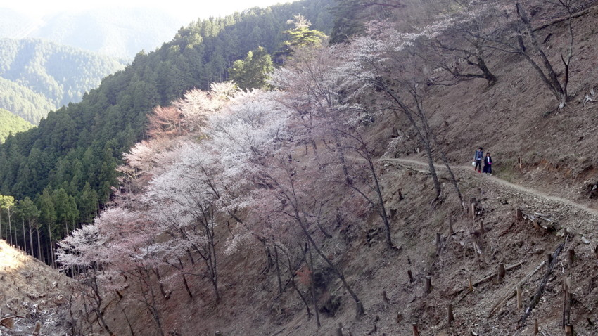 f:id:shioshiohida:20160411162856j:plain