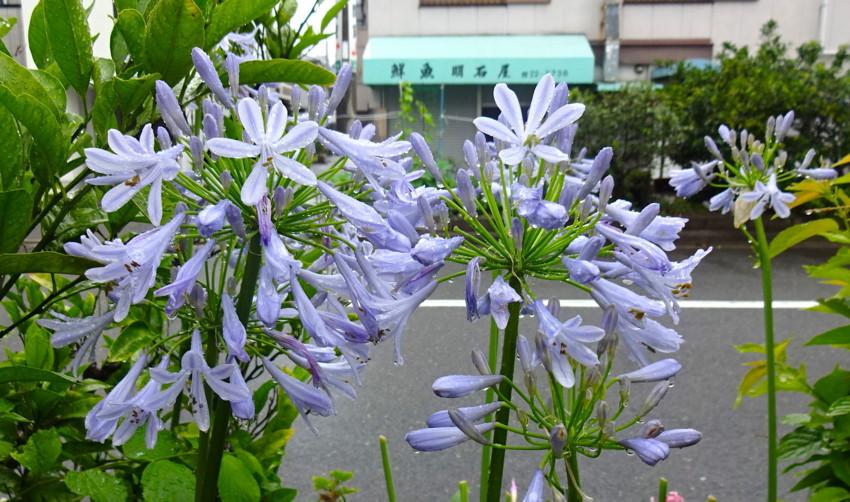 f:id:shioshiohida:20160619130128j:plain