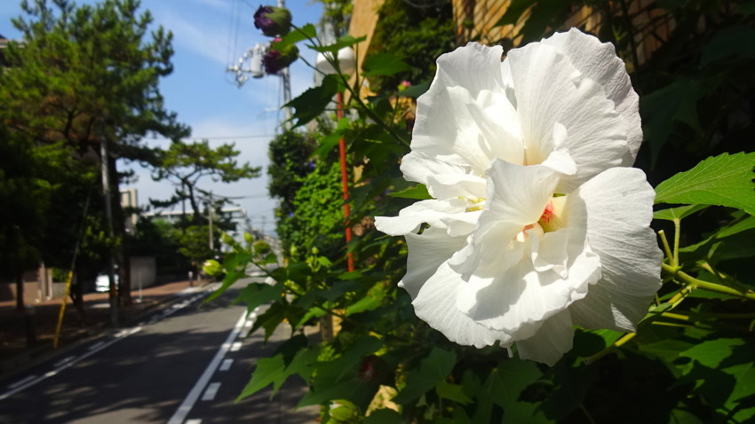 f:id:shioshiohida:20160901095808j:plain