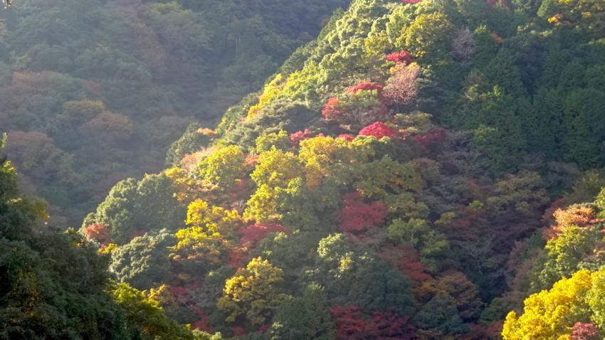 f:id:shioshiohida:20161116140458j:plain