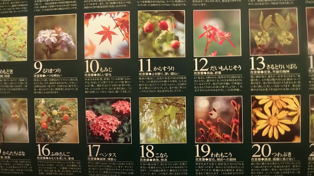 f:id:shioshiohida:20161130082521j:plain
