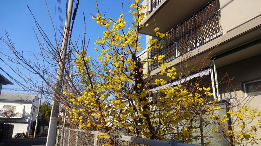 f:id:shioshiohida:20170110101954j:plain