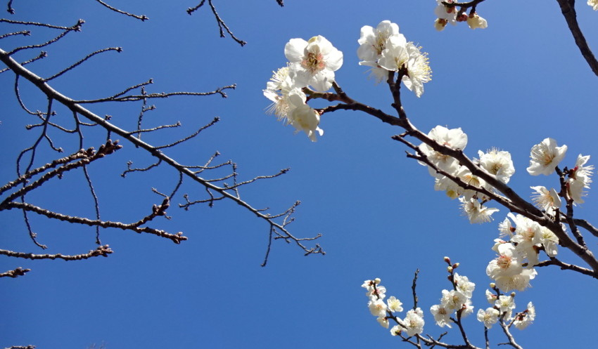 f:id:shioshiohida:20170228122456j:plain