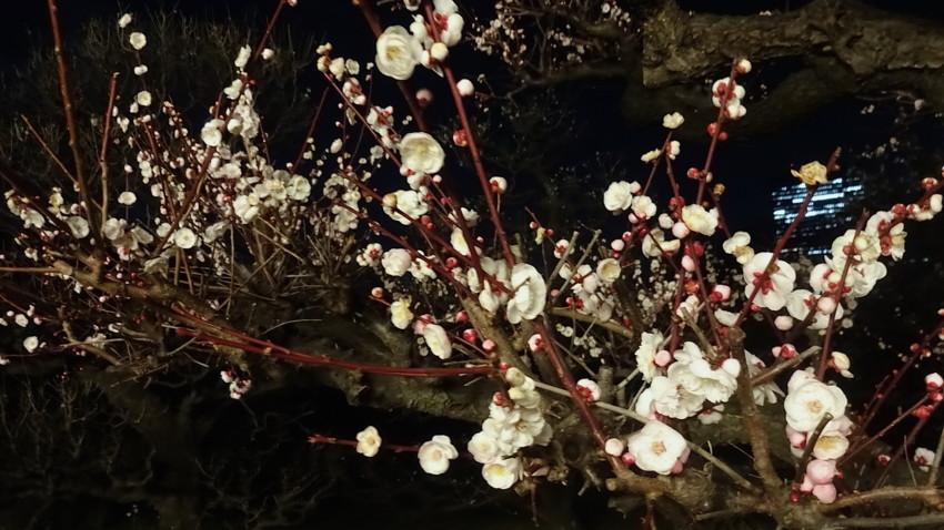 f:id:shioshiohida:20170310193212j:plain