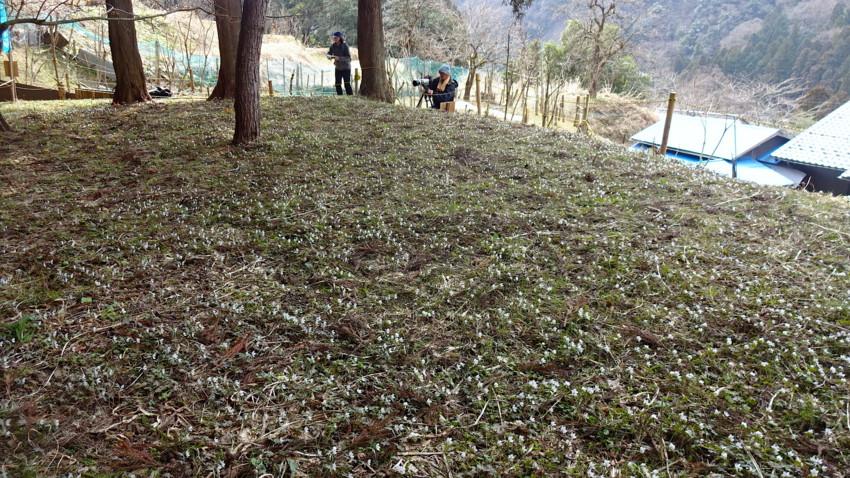 f:id:shioshiohida:20170318122422j:plain