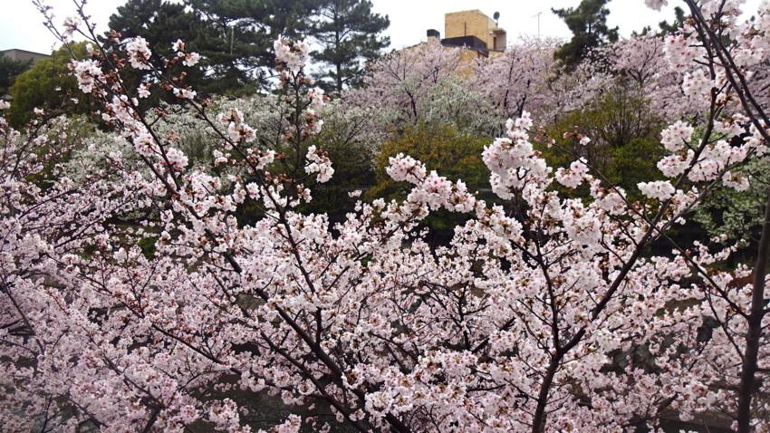 f:id:shioshiohida:20170411135254j:plain