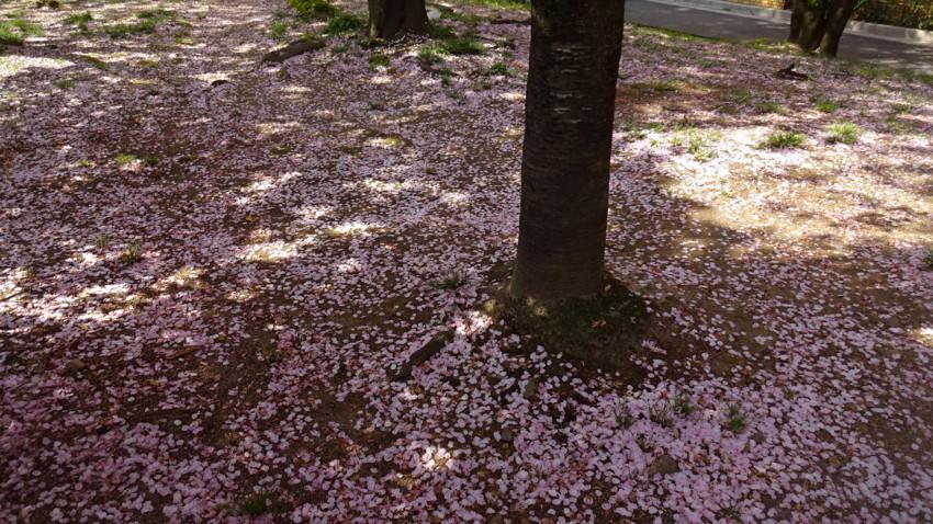 f:id:shioshiohida:20170414092709j:plain