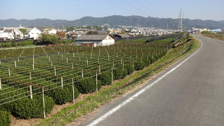 f:id:shioshiohida:20171106134441j:plain