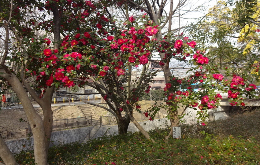 f:id:shioshiohida:20180217093225j:plain