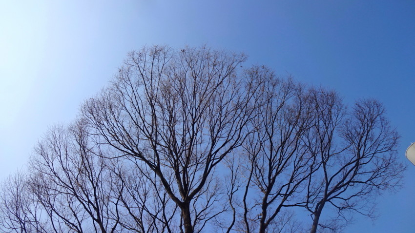 f:id:shioshiohida:20180312092122j:plain
