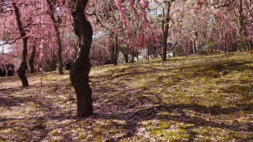 f:id:shioshiohida:20180312150105j:plain