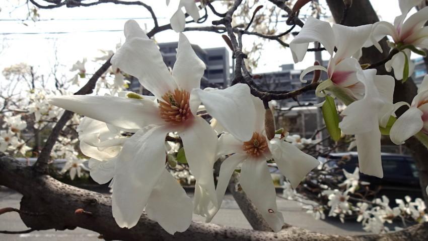 f:id:shioshiohida:20180325114300j:plain