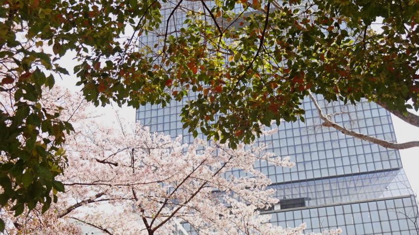 f:id:shioshiohida:20180402112115j:plain