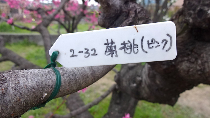 f:id:shioshiohida:20180405175120j:plain