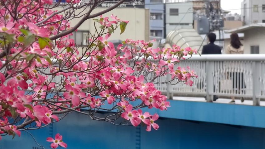 f:id:shioshiohida:20180416172912j:plain