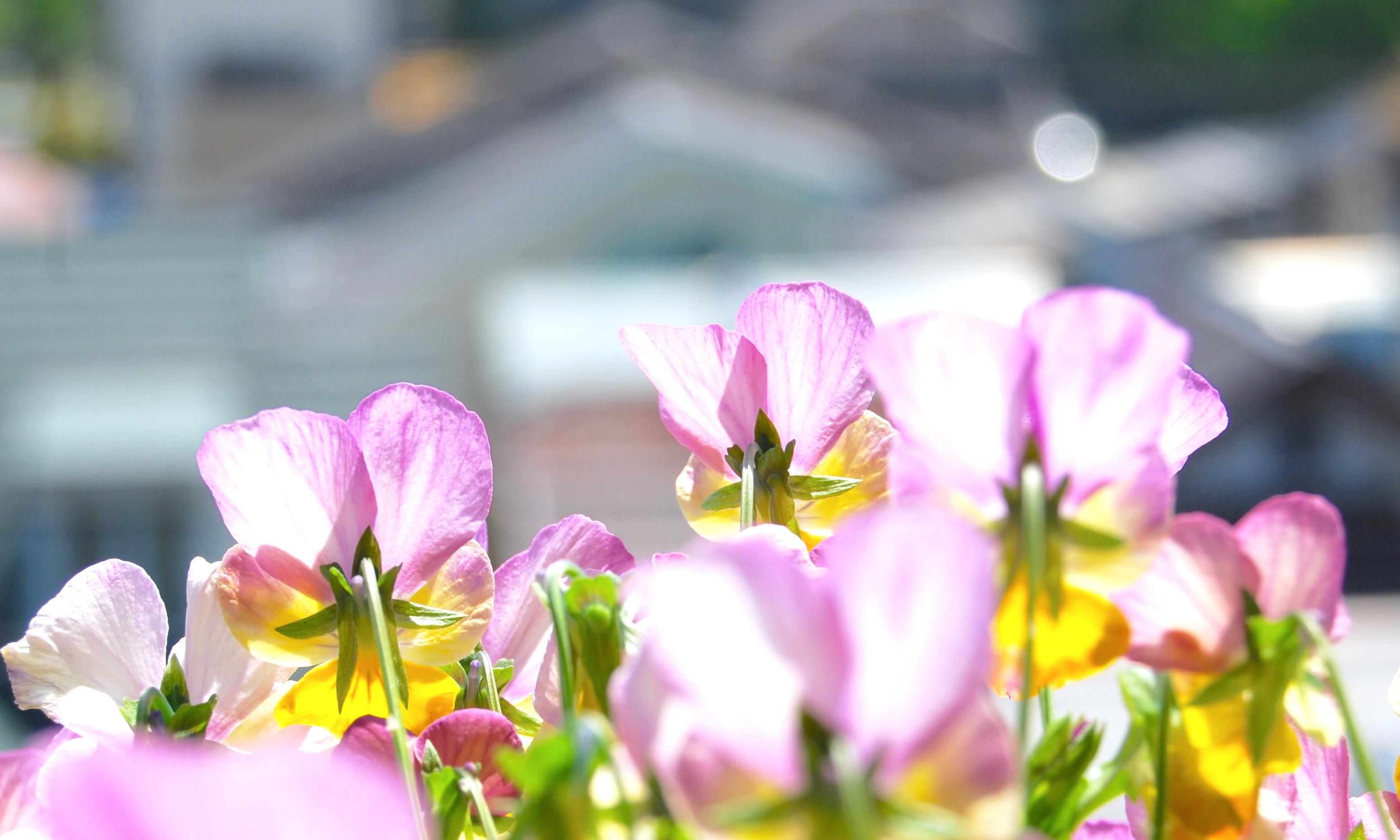 https://cdn-ak.f.st-hatena.com/images/fotolife/s/shioshiohida/20180429/20180429095544_original.jpg