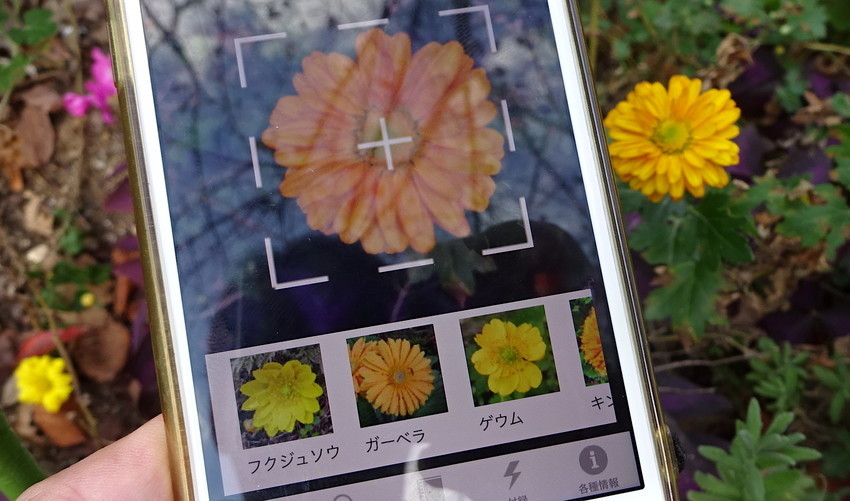 f:id:shioshiohida:20181106124642j:plain
