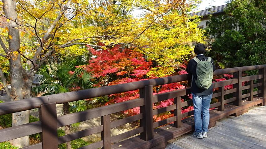 f:id:shioshiohida:20181130124232j:plain