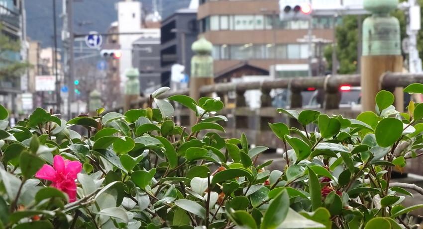 f:id:shioshiohida:20190228160505j:plain