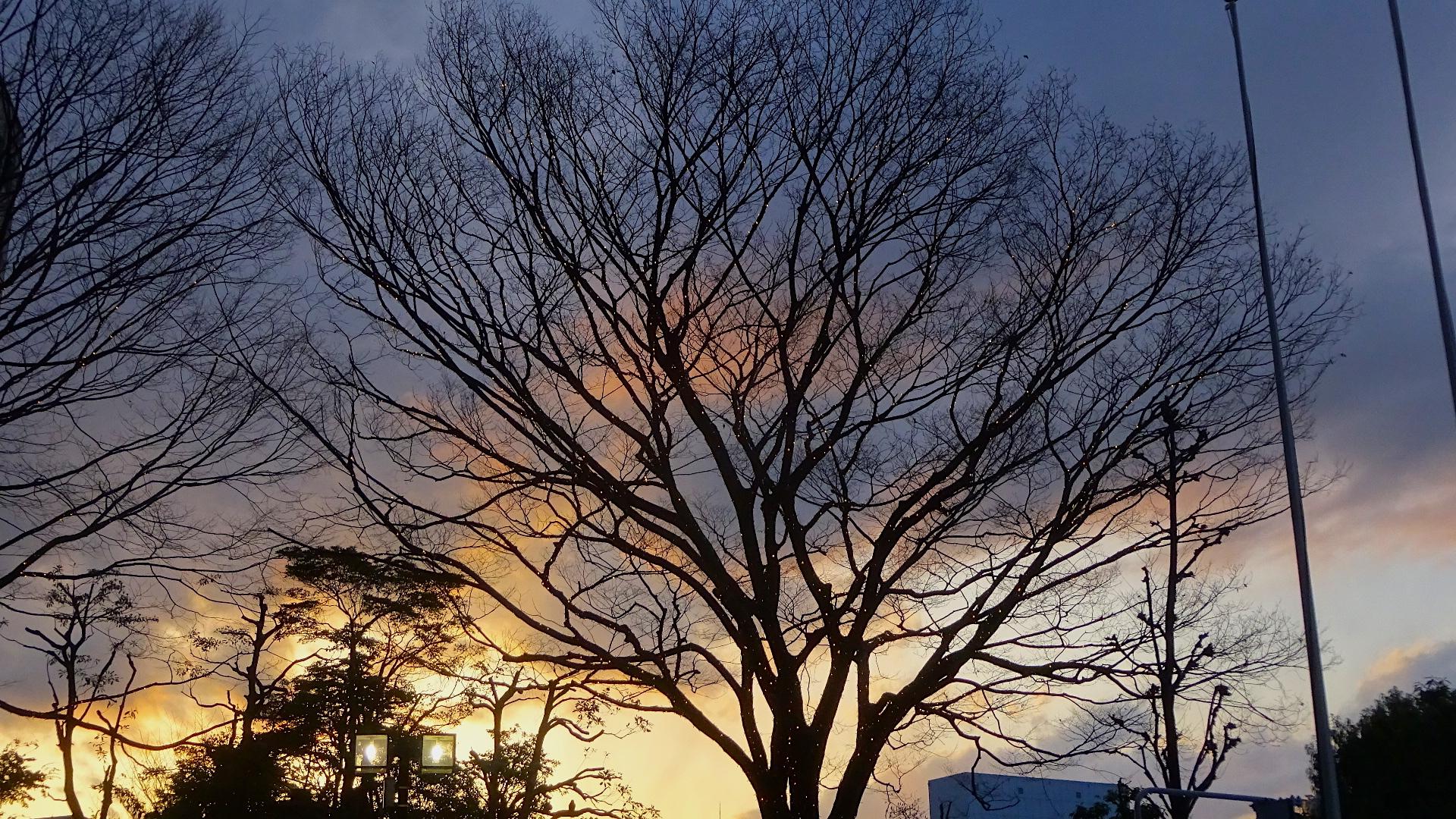 https://cdn-ak.f.st-hatena.com/images/fotolife/s/shioshiohida/20190316/20190316174931_original.jpg