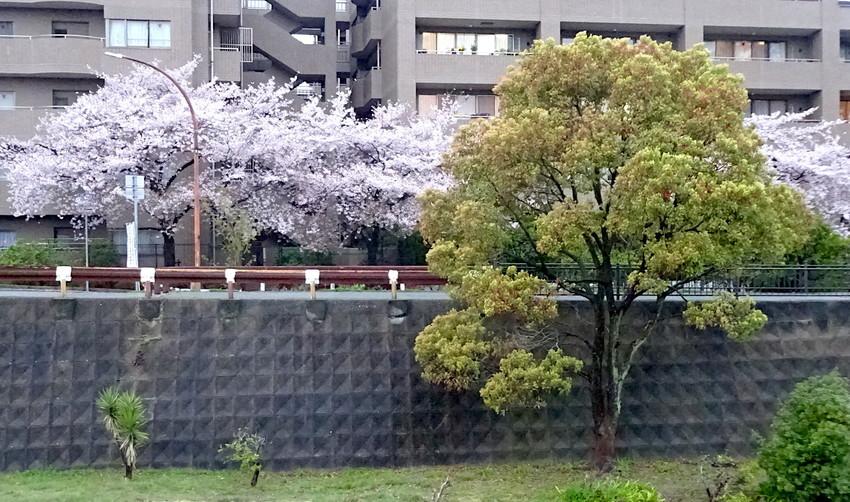 f:id:shioshiohida:20190410181202j:plain
