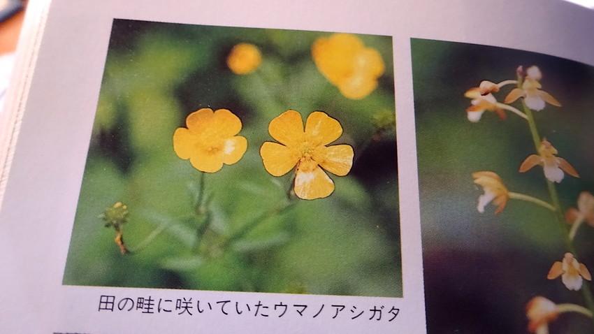 f:id:shioshiohida:20190423143248j:plain