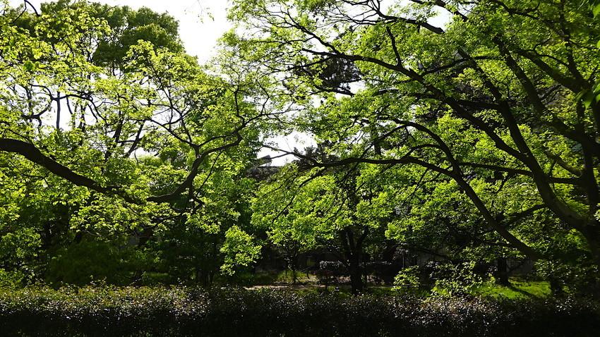 f:id:shioshiohida:20190427155957j:plain