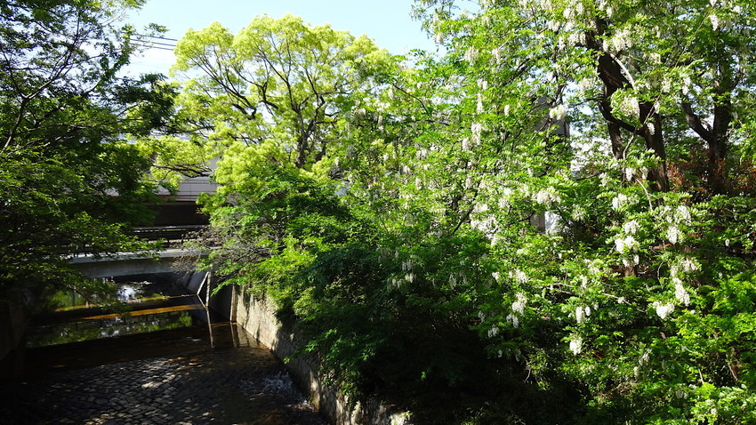 f:id:shioshiohida:20190505145613j:plain