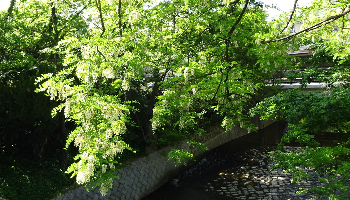 f:id:shioshiohida:20190508161414j:plain