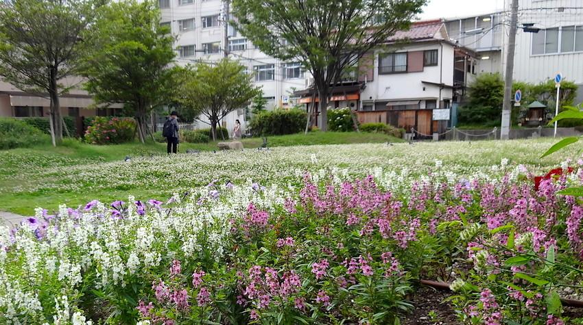 f:id:shioshiohida:20190611181142j:plain