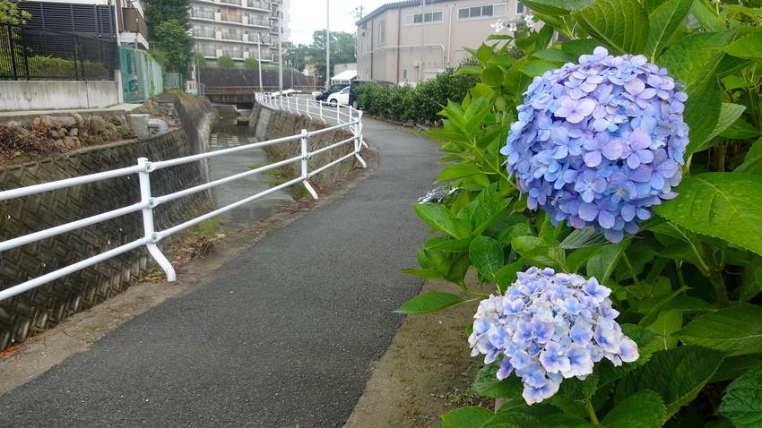 f:id:shioshiohida:20190711153047j:plain