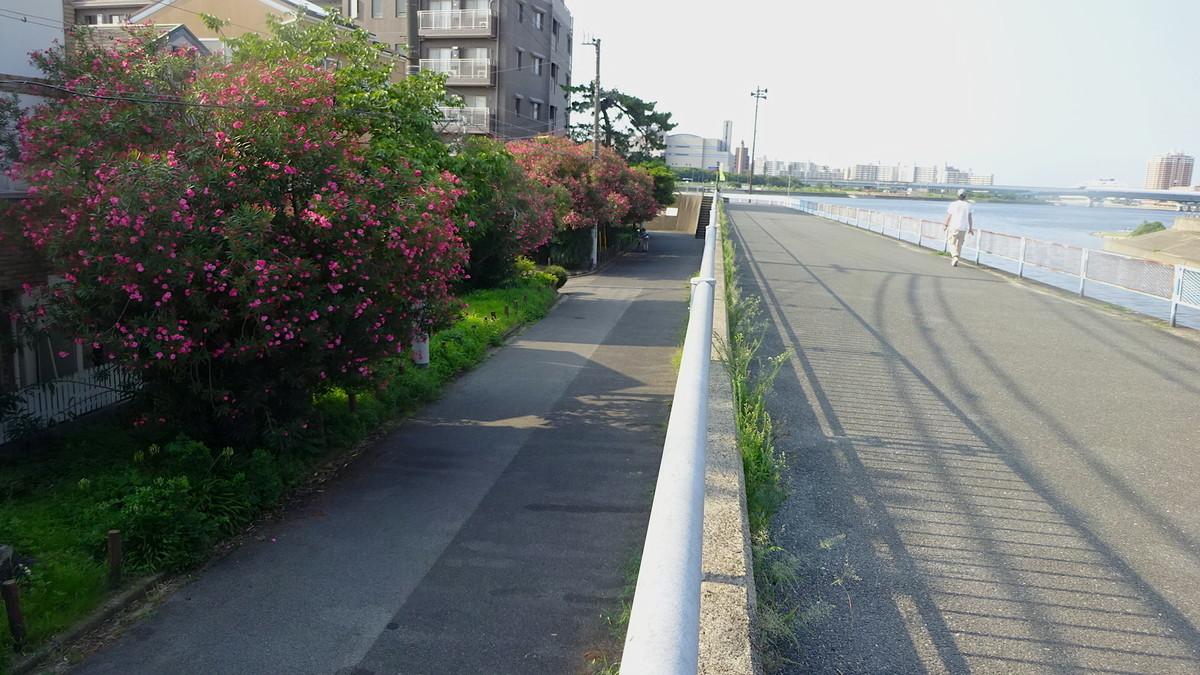 f:id:shioshiohida:20190803080903j:plain