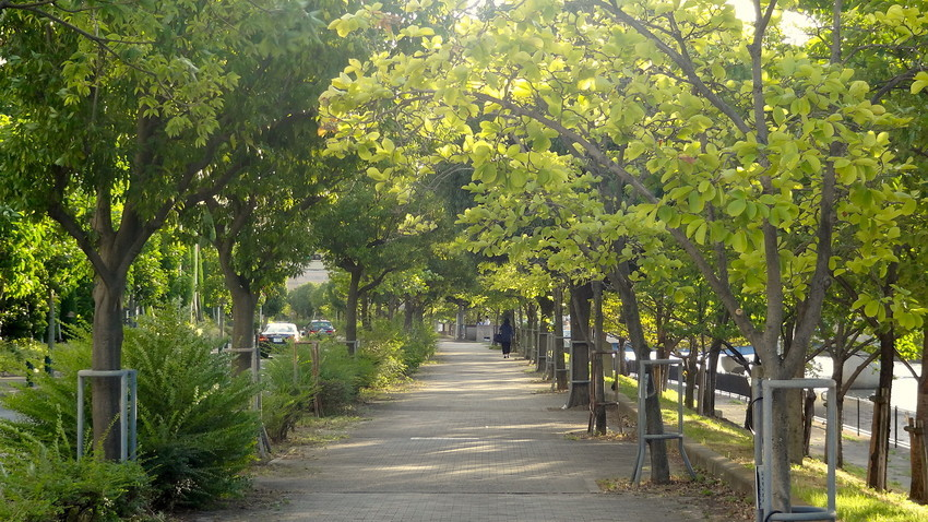 f:id:shioshiohida:20190813175549j:plain