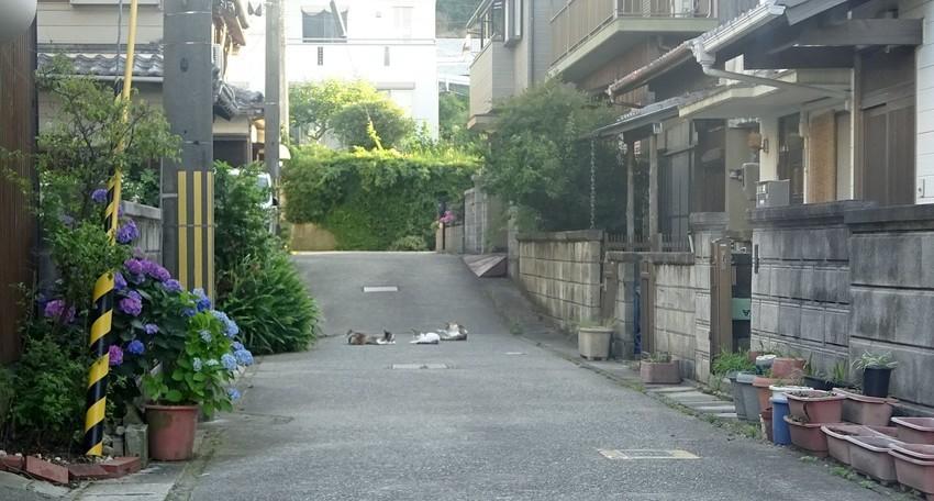 f:id:shioshiohida:20200620180012j:plain