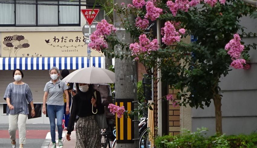 f:id:shioshiohida:20200723141924j:plain