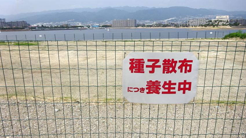 f:id:shioshiohida:20200804115119j:plain