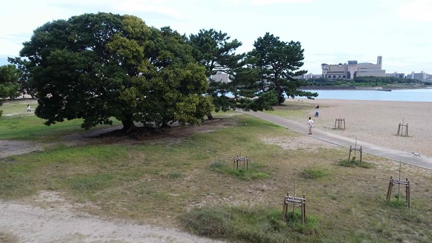 f:id:shioshiohida:20200812184242j:plain