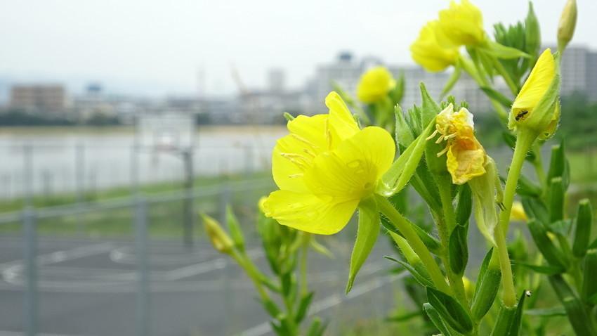 f:id:shioshiohida:20200909101144j:plain