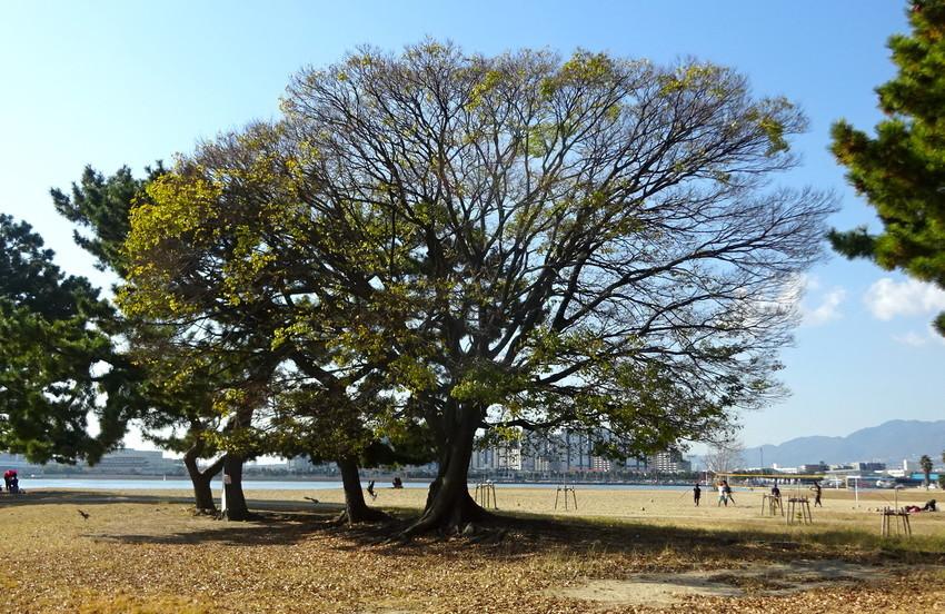 f:id:shioshiohida:20201205121356j:plain