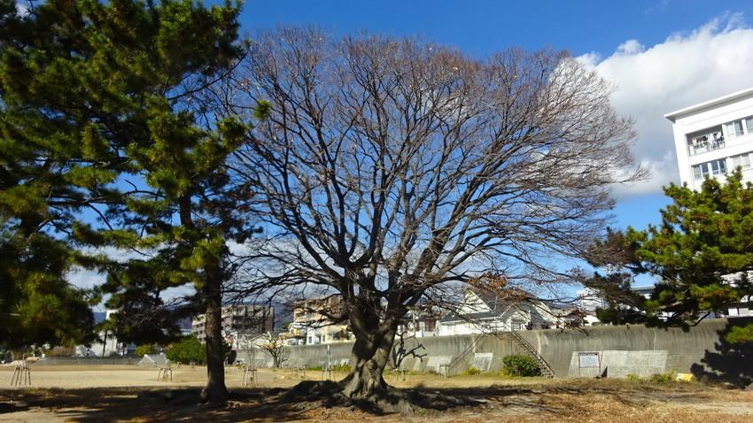 f:id:shioshiohida:20201221113609j:plain